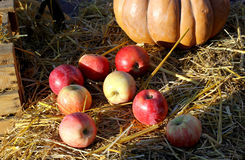 Background with rural farm autumn apples Royalty Free Stock Images