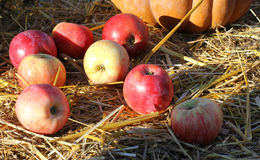 Background with rural farm autumn apples Stock Photography