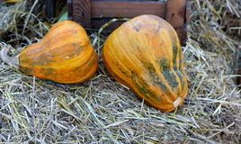 Background with rural farm autumn pumpkin Royalty Free Stock Images