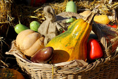 Background with rural farm autumn vegetables Royalty Free Stock Images