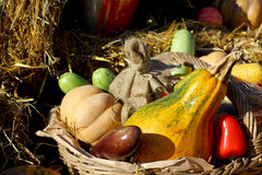 Background with rural farm autumn vegetables Stock Image