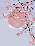 Background with sakura blossom Royalty Free Stock Images