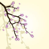 Background with sakura branch Stock Photography