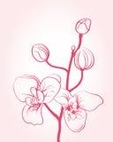 Background with sakura flowers Royalty Free Stock Image