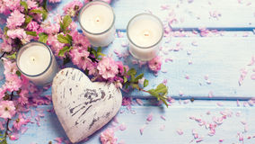 Background  with sakura  pink flowers, decorative heart  and can Stock Images