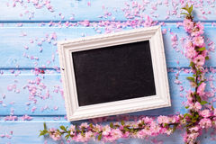 Background  with  sakura pink flowers  and empty blackboard Royalty Free Stock Image