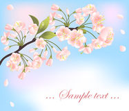 Background with sakura tree Stock Photo