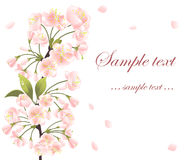 Background with sakura tree Royalty Free Stock Images