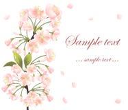Background with sakura tree Royalty Free Stock Images