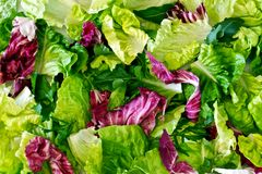 Background of salad leaves Stock Photography