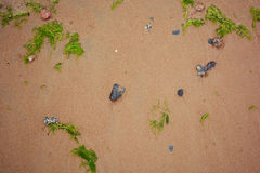 Background sand beach with seaweed and seashells royalty free stock photos