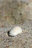 Background of sand with shell Stock Photos