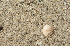 Background from sand and a shell Royalty Free Stock Photos