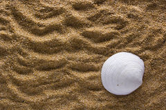 Background of sand with shell Stock Image