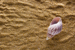 Background of sand with shell Royalty Free Stock Photo
