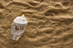 Background of sand with shell Stock Photo