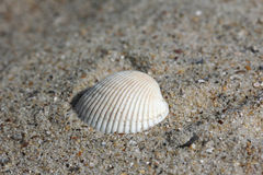 Background of sand with shells Royalty Free Stock Photos