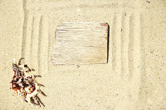 Background of sand with shells on the beach Stock Photo