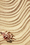 Background of sand with shells on the beach Stock Images