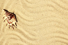 Background of sand with shells on the beach Royalty Free Stock Photography