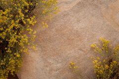 Background of sandstone with yellow flowers. Growing in the top left and bottom right corners Royalty Free Stock Photography