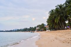 Background, sandy ocean coast island of Koh Samui. Palm trees on the shore royalty free stock images