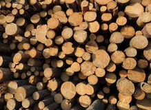 Background of sawn timber Stock Photography