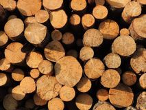 Background of sawn timber Stock Image