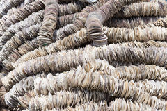 Background of Scallop shells Stock Image