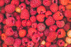 Background of a scattering of red and yellow raspberries. Top view Stock Photography