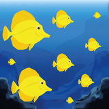 Background Scene With A Group Of Fishes Stock Photos