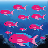 Background Scene With A Group Of Fishes Royalty Free Stock Photography