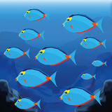 Background Scene With A Group Of Fishes Stock Image