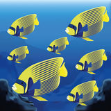 Background Scene With A Group Of Fishes Royalty Free Stock Images