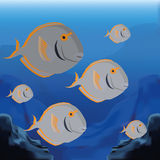 Background Scene With A Group Of Fishes Royalty Free Stock Photo