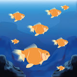 Background Scene With A Group Of Fishes Stock Photography
