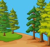 Background scene with pine trees in field Royalty Free Stock Image