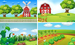 Background scenes with vegetables on the farm Royalty Free Stock Photos