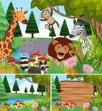 Background scenes with wild animals  Royalty Free Stock Photos