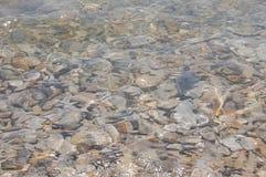 Background a sea-bottom Royalty Free Stock Photo