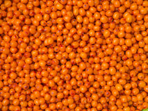 Background of sea-buckthorn berries. Background of yellow sea-buckthorn berries Royalty Free Stock Photography