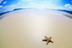 Background with sea coast and starfish Stock Image