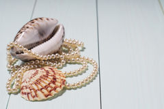 Background with sea cockleshells and pearls stock image