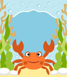 Background sea with crab Stock Photo