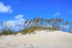 Background Sea Oats Dunes Royalty Free Stock Photography