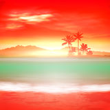 Background with sea and palm trees Stock Photos