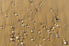 Background of sea sand Royalty Free Stock Photos