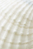 Background of sea shell surface texture Royalty Free Stock Images