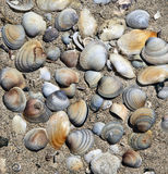 Background of sea shells. And sand beach location Stock Photos