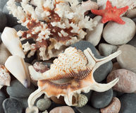 The background of sea shells Royalty Free Stock Photography